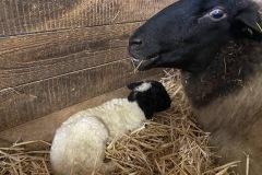 Mutter-mit-Lamm